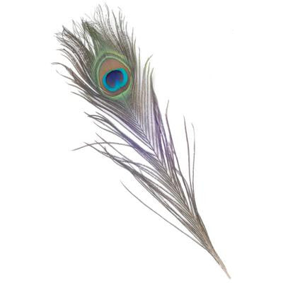 Peacock Feathers 25-30cm 3 Pk