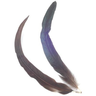 Cockerel Feathers - 12 Pk