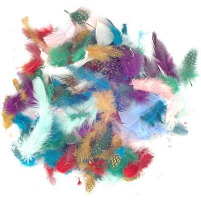 Exotic Feathers