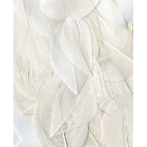 Artemio Feathers 3g White