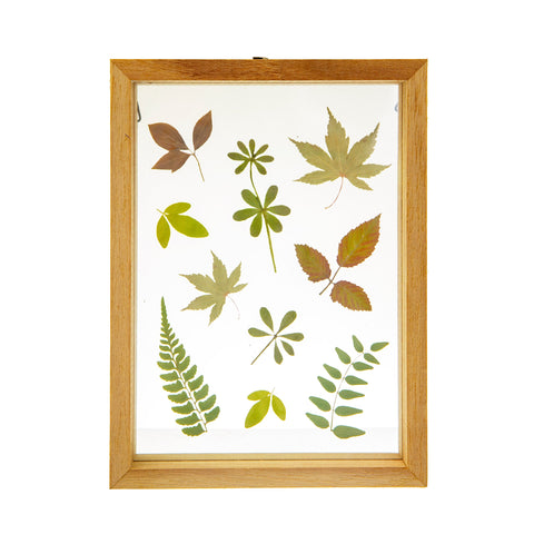 Herbarium Leaves Floating Frame