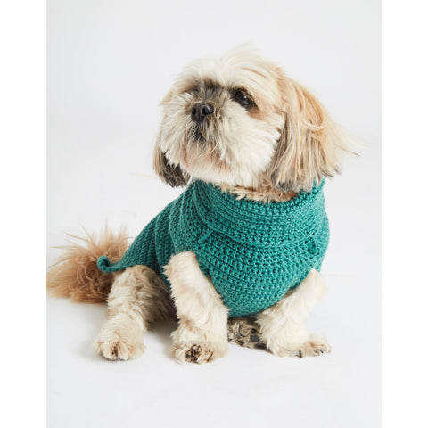 Shi Tzu wearing green jumper
