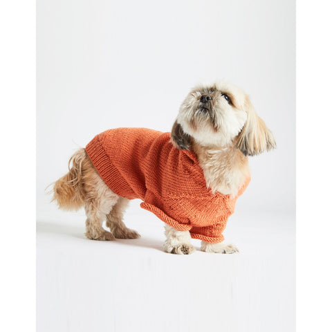 Shi Tzu Wearing orange coat