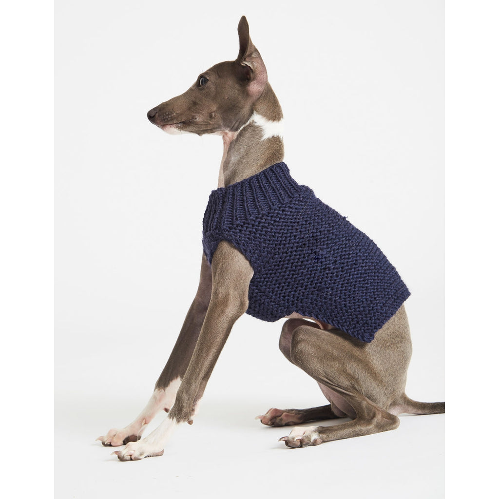 Whippet wearing blue jumper.