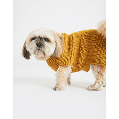Dog wearing mustard yellow jumper
