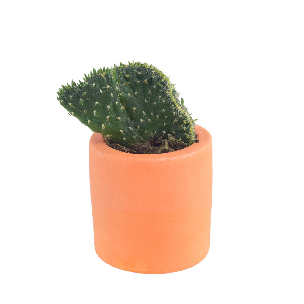 Orange Palette Plant Pot