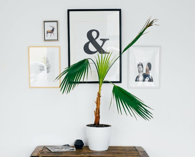 wall art and plant pairings