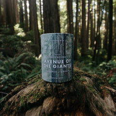 Redwood National's Avenue of the Giants Candle