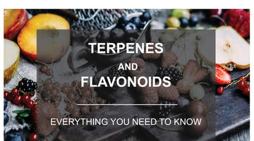 Difference between Terpenes and Flavonoids