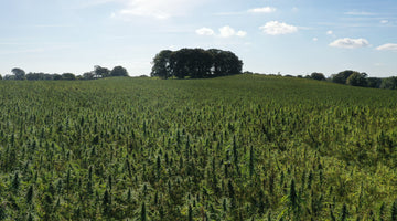 The Irish Farmers Journal 25 January 2020 - Making a success of hemp