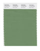 Pantone SMART Color Swatch 17-0123 TCX Stone Green