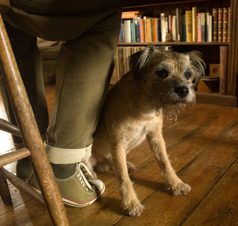 Tanner the Border Terrier in the workshop - Earthworks Journals