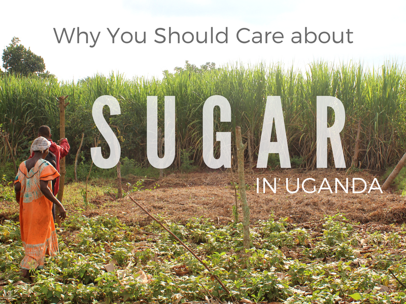 Why You Should Care About Sugar in Uganda