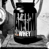 Animal by Universal Animal Whey