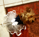 Denim and Tulle Tutu - Chic Doggie Boutique  - 1