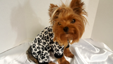 Dog Pajamas, Black and White Paw Print - Chic Doggie Boutique  - 1