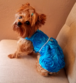 Blue Ruffles with Pearls
