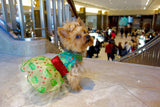 Holly Berry Christmas Dress - Chic Doggie Boutique  - 1