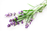 Lavender (English) Essential Oil