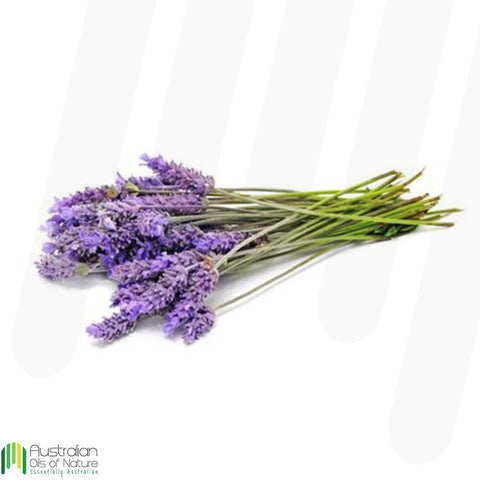 Lavender (Bulgarian) Essential Oil