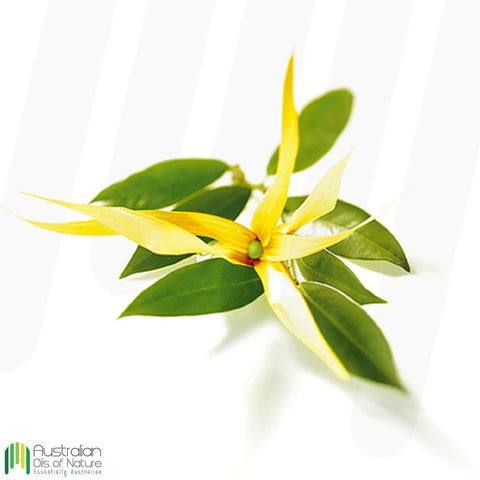 Ylang Ylang Complete Essential Oil
