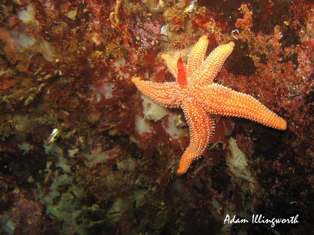 Three and Three Seastar