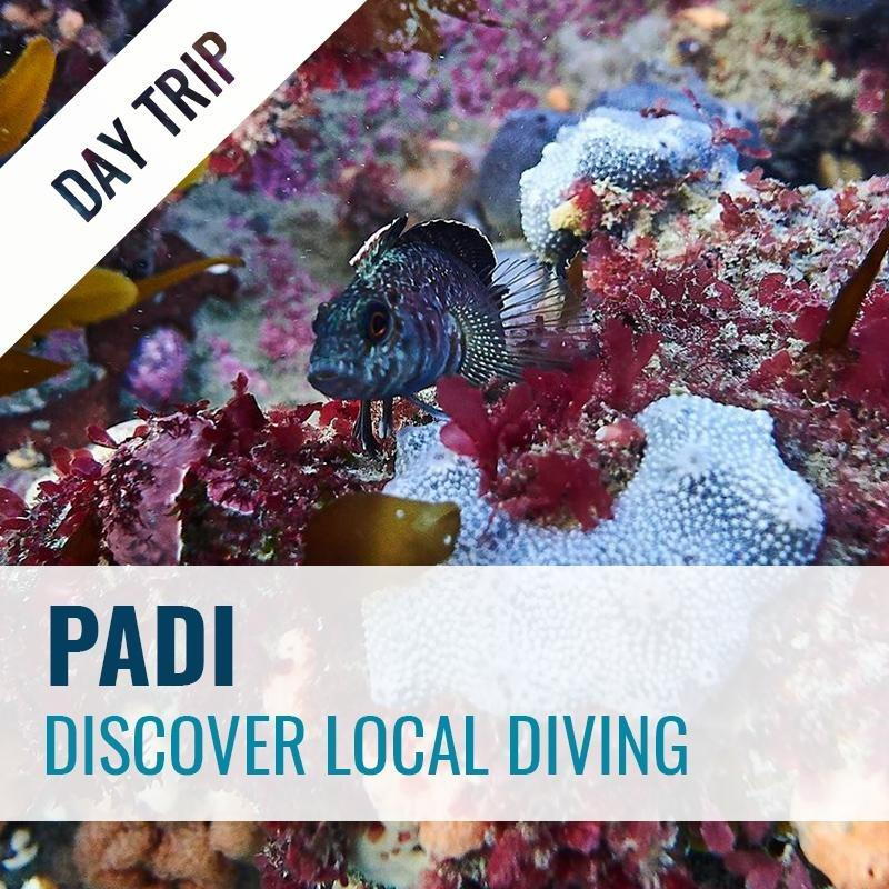 Discover Local Diving Dive Trip PADI