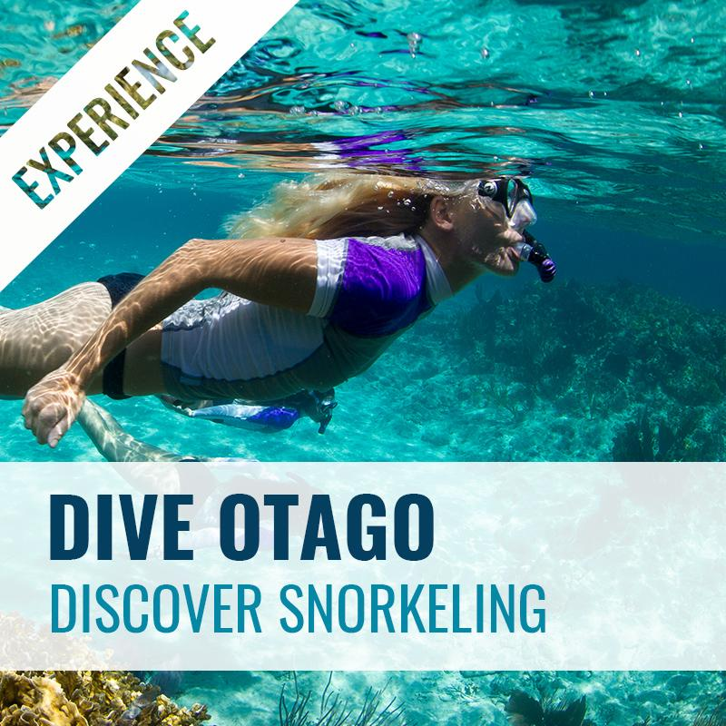 Discover Snorkelling Experience