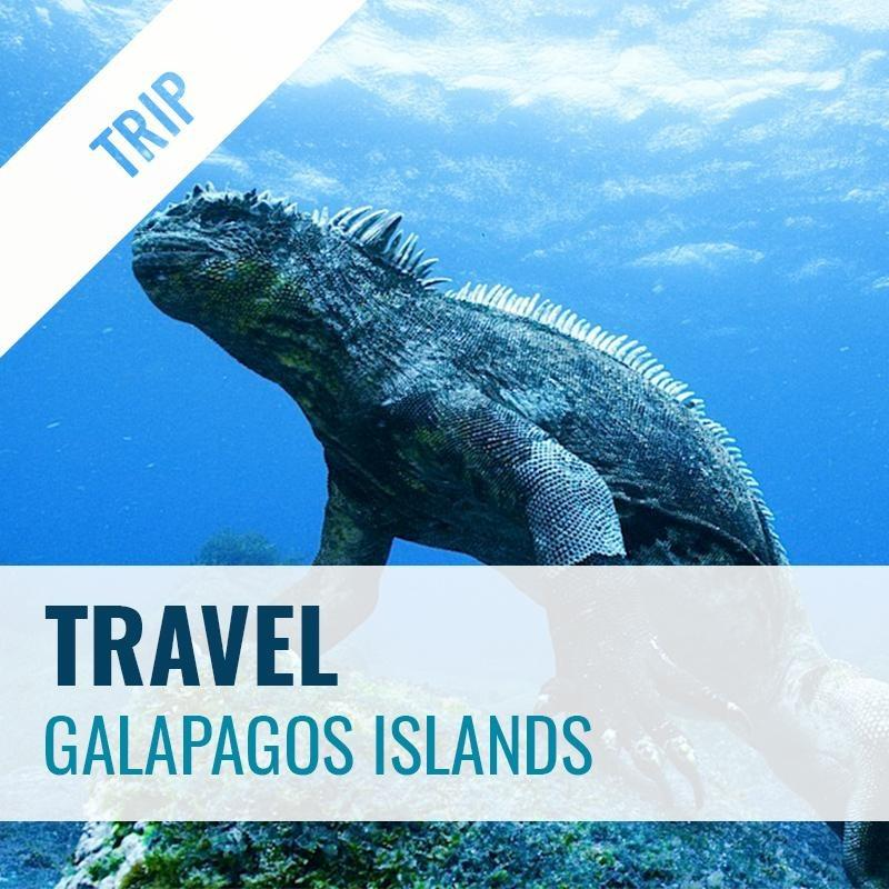 Galapagos Islands Dive Trip