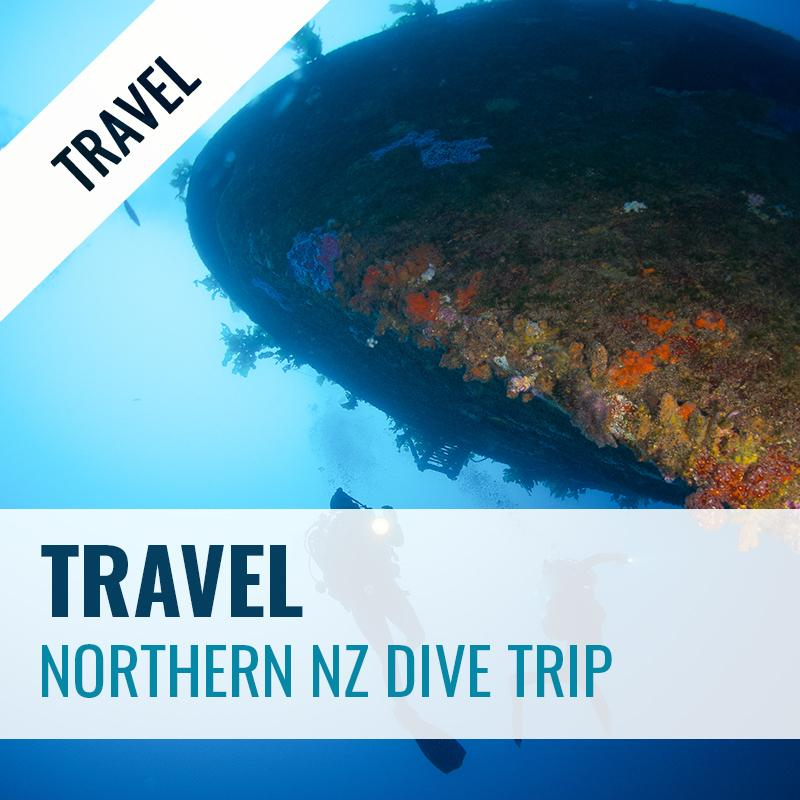 Northern New Zealand Dive Trip 2020