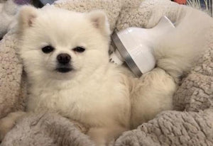 A massager that makes dogs and cats happy