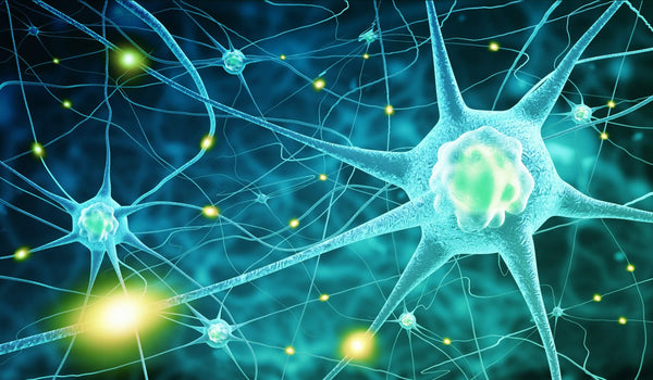 Neurons - Vitamin B12 protects the nerves