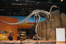 Archaeornithomimus asiaticus dinosaur skeleton cast replica