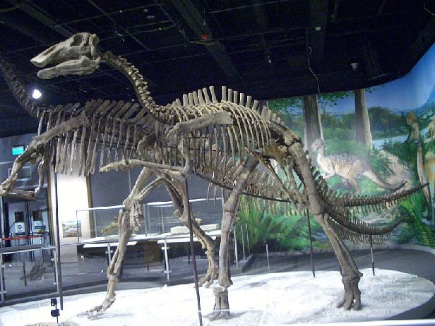 Bactrosaurus sp. skeleton cast replica