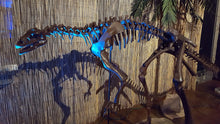 Lufengosaurus skeleton Rental Dinosaur Adult skeleton