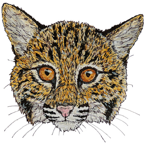Cooper the Rehab Bobcat by former intern now conservation biologist and wildlife artist Emma Buck