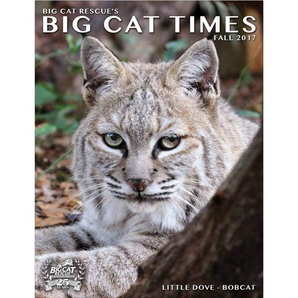 Big Cat Times Magazine 2017 Fall - Magazine