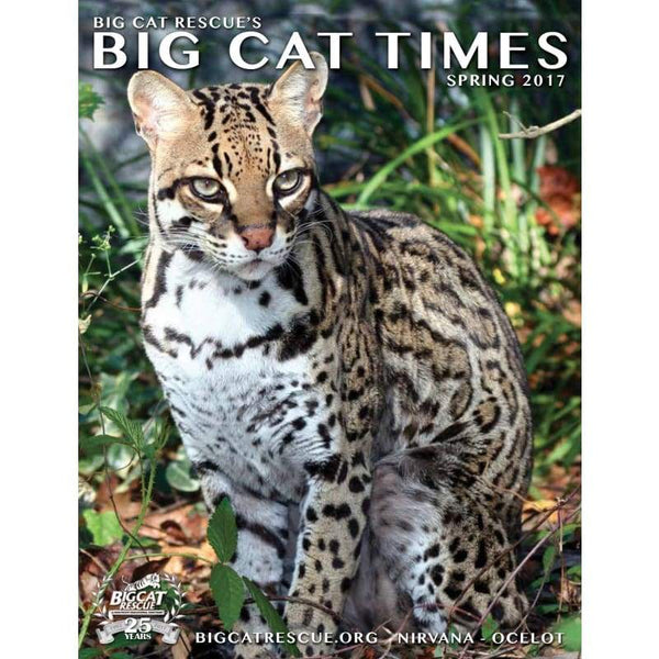 Big Cat Times Magazine 2017 Spring - Magazine