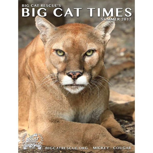 Big Cat Times Magazine 2017 Summer - Magazine