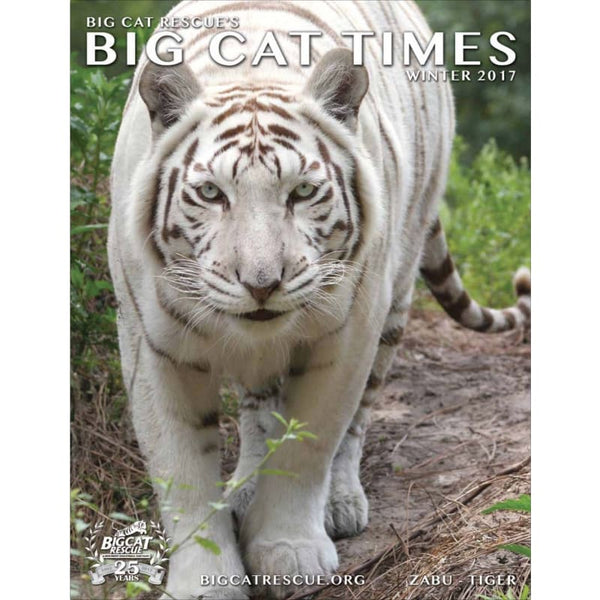 Big Cat Times Magazine 2017 Winter - Magazine