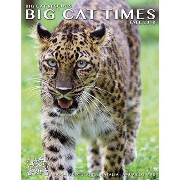 Big Cat Times Magazine 2018 Fall - Magazine