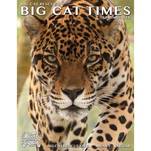 Big Cat Times Magazine 2018 Spring - Magazine