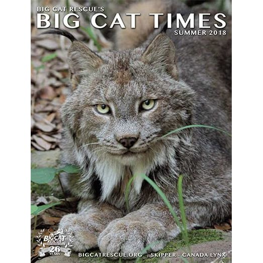 Big Cat Times Magazine 2018 Summer - Magazine