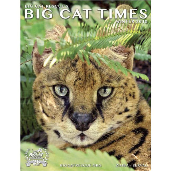 Big Cat Times Magazine 2018 Winter - Magazine
