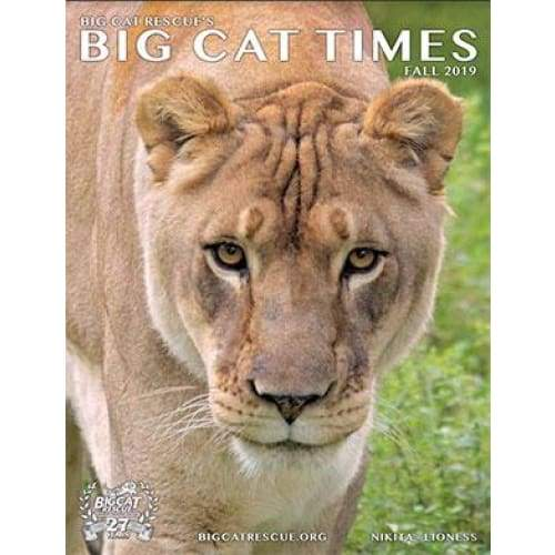 Big Cat Times Magazine 2019 Fall - Magazine