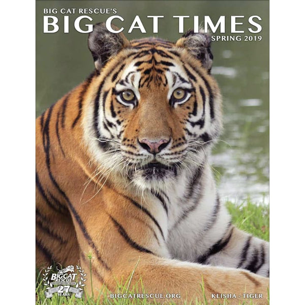 Big Cat Times Magazine 2019 Spring - Magazine