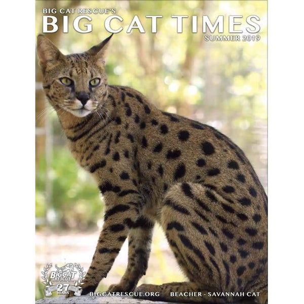 Big Cat Times Magazine 2019 Summer - Magazine
