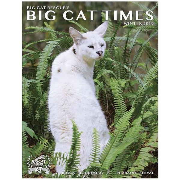 Big Cat Times Magazine 2019 Winter - Magazine