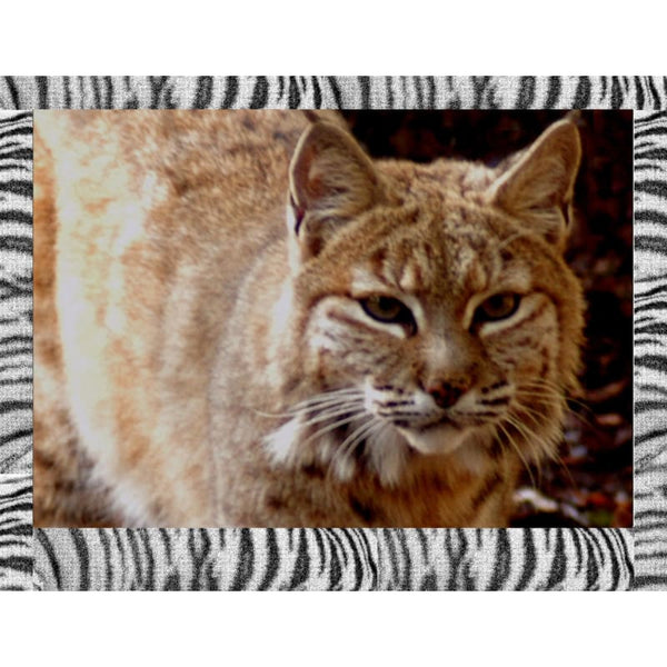 Photo Download Bobcat 06 - a websize - Photo