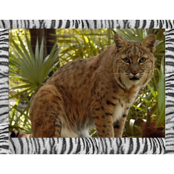 Photo Download Bobcat 07 - a websize - Photo